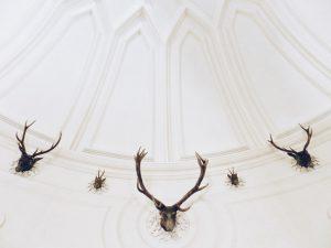 taxidermy skulls